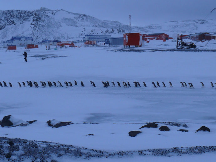 Миграция пингвинов на территории станции