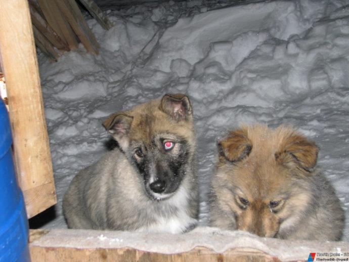 Расстроенные мордашки собачек